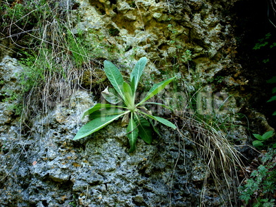 grüne Pflanze am Wegesrand