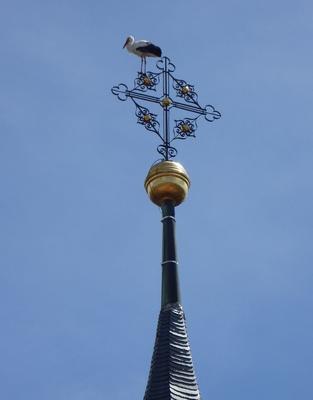 Jungstorch auf der Kirchturmspitze