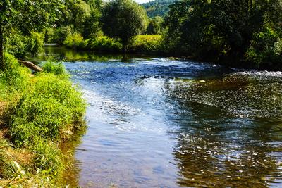 Natur pur am Neckar bei Horb