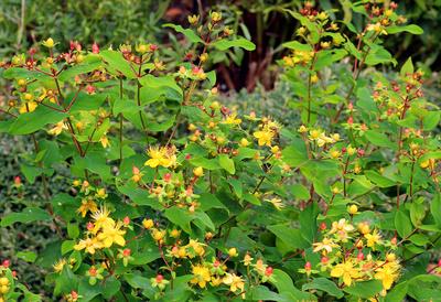 Der Gesunde Garten