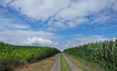 monotonie in der agrarindustrie