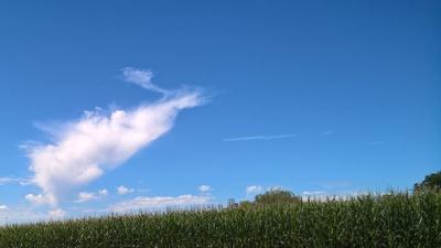 Wolken über Maisfeld