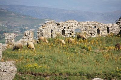 Schafe in Ruinen