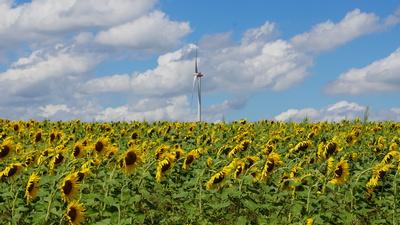 Sonnenblumen und Windrad