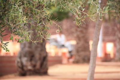 Olivenzweig im Park
