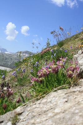 Alpenblumen am Straßenrand