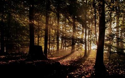 im Märchenwald....
