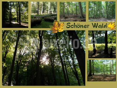 Schöner Wald