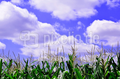 Landwirtschaft am Stadtrand
