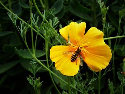 Bienenfreundlicher Garten