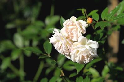 Blüten 449