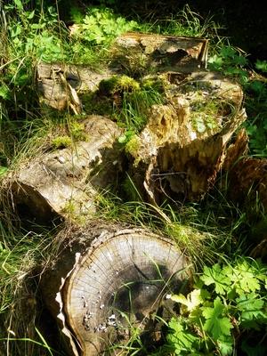 Totholz im naturnahen Garten