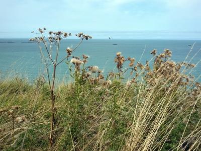 Blick aufs Meer am Cap Frehel