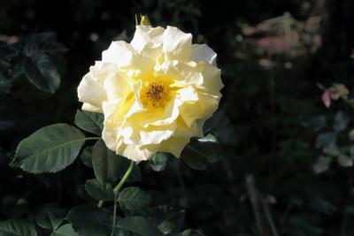 Blüten 454