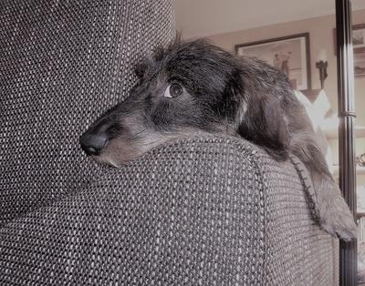 Couchpotato (bearbeitet)
