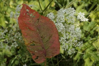 Blatt-, Blume- und Insektengemeinschaft