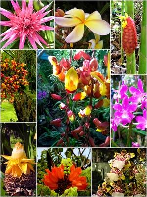 Blumen auf Madeira - Collage 1