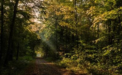 Morgenspaziergang im Herbstwald