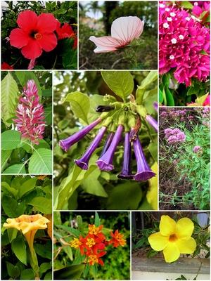 Blumen auf Madeira - Collage 2