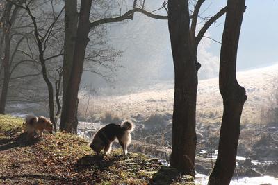 Morgennebel in Rothenburg