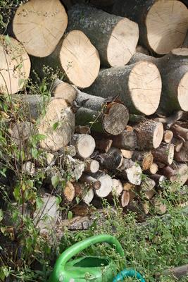 Holzvorrat im Garten