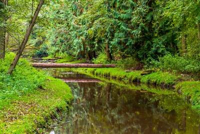 Herbststimmung am Fließ