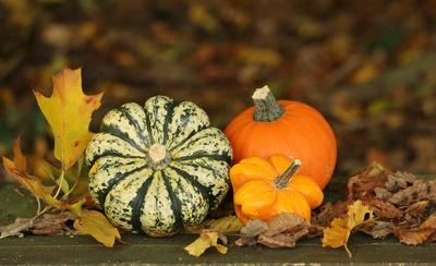 Herbstdeko im Garten