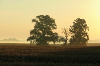 Bäume im goldenen Morgenlicht
