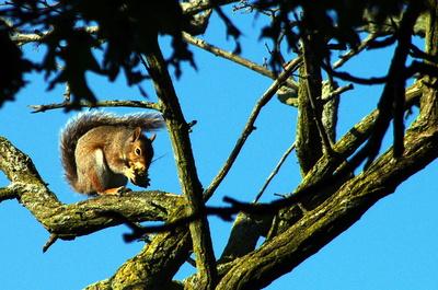 Eichhörnchen beim Frühstück
