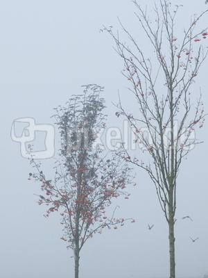 beerenfrühstück im nebel