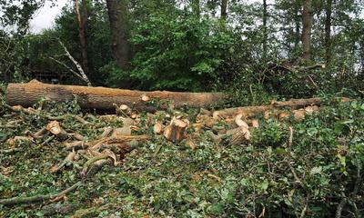 xavier macht kleinholz 2