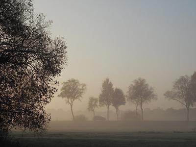 nebel in den wiesen