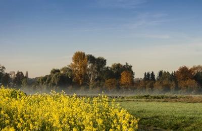 Gelbe Blütenpracht im Oktober