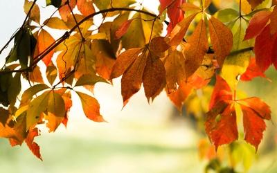 Herbstimpressionen ..3..