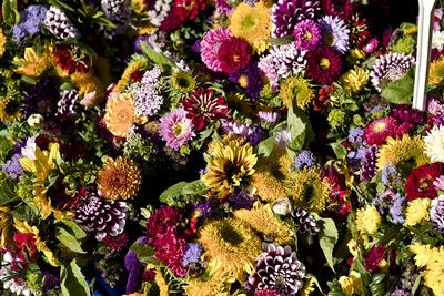 Kostenloses Foto Herbstblumen Pixelio De