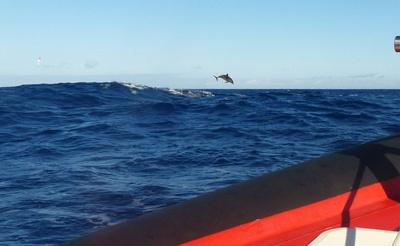 Delfinbeobachtung auf den Azoren