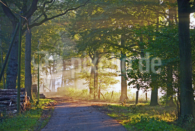 Herbstmorgen mit Frühnebel