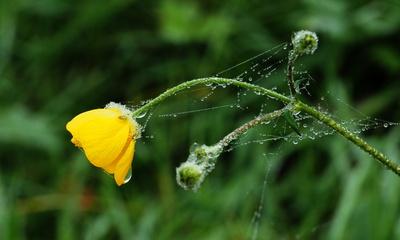 butterblümchen 3