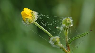 butterblümchen 4