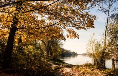 Herbst am Rhein ... bei Rheinfelden Schweiz