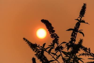 Die rote Sonne