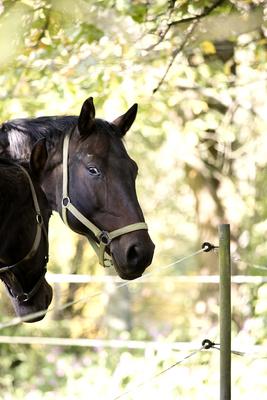 Pferde im Oberberg III