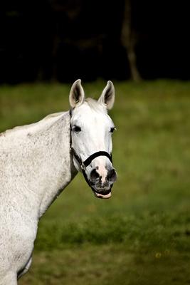 Pferde im Oberberg IV