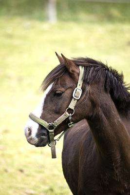 Pferde im Oberberg V