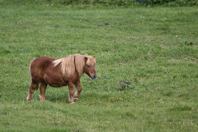 Ponys im Oberberg I