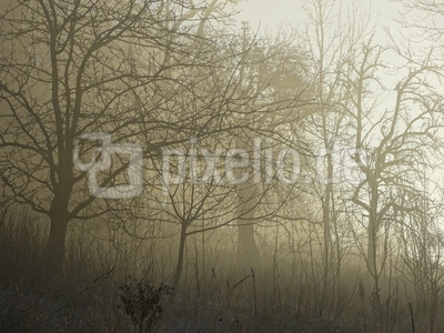 Jungwald im Nebel