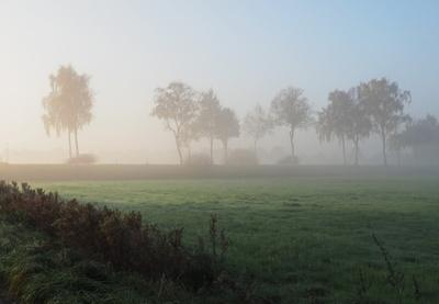 nebel in den wiesen 3