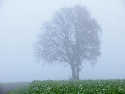 nebel in den feldern