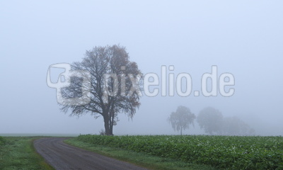 nebel in den feldern 2