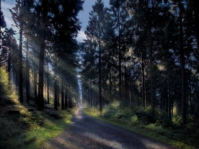 Vollmondnacht im Wald